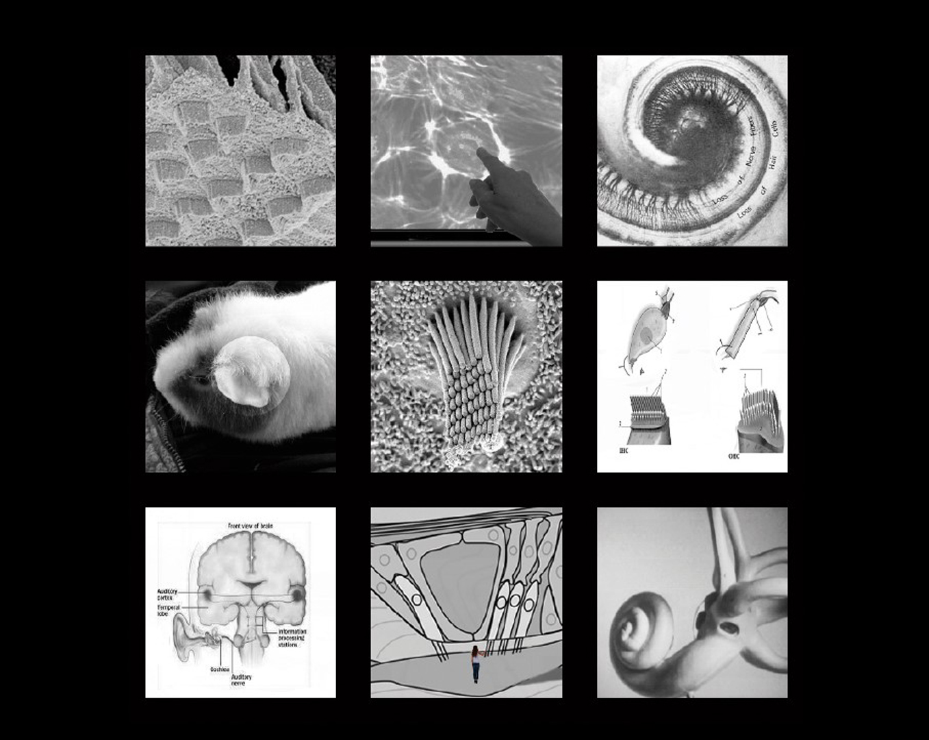 ©ISEA2016: 22nd International Symposium on Electronic Art, Jill Scott, AURALROOTS: Cross-modal Interaction and Learning