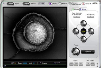 2016 Tyurina Exploring the Medium: The Indexical Function of Artistic Photomicrography Made by the Scanning Electron Microscope