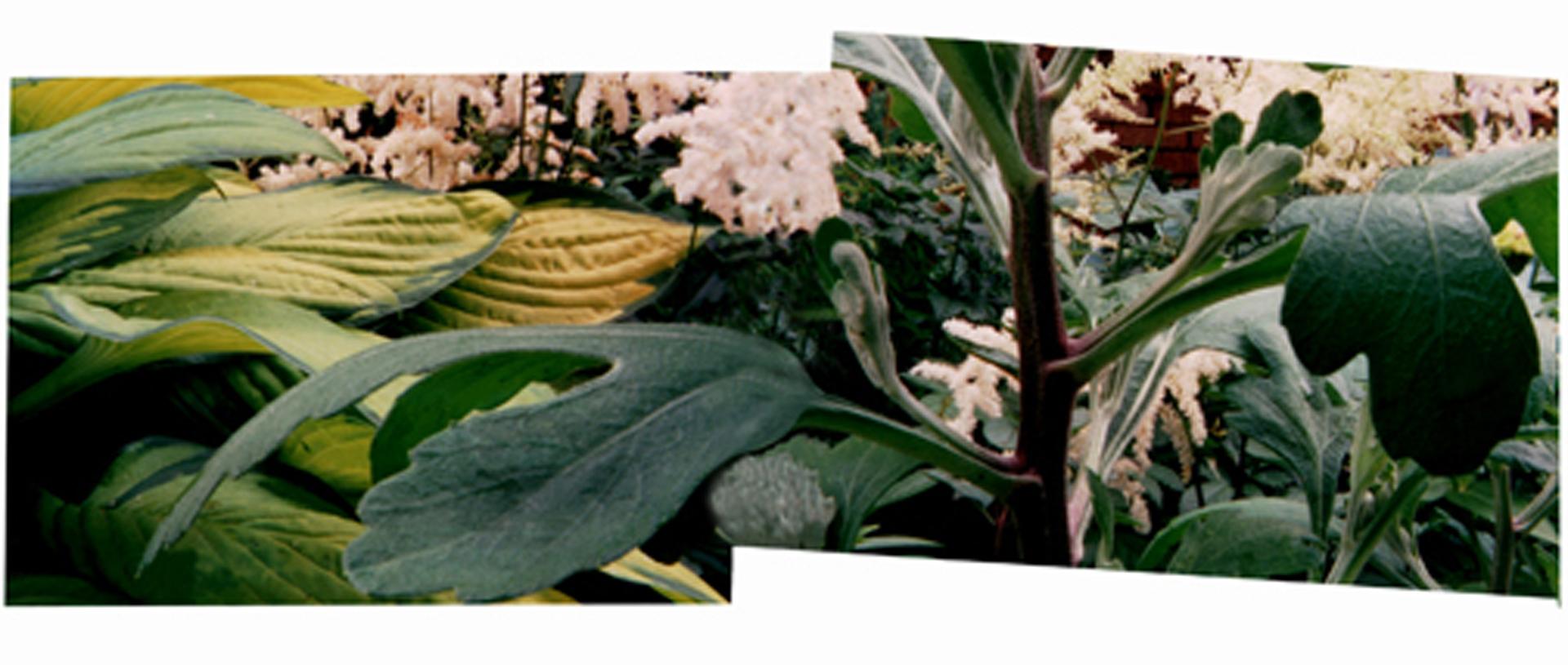 ©, Gloria DeFilipps Brush, The Twice Constructed Garden
