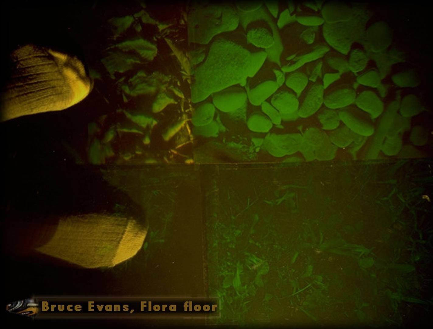 ©, Bruce Evans, Flora Floor