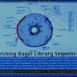 The Transgenic Bagel