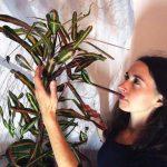 Domestic Plant