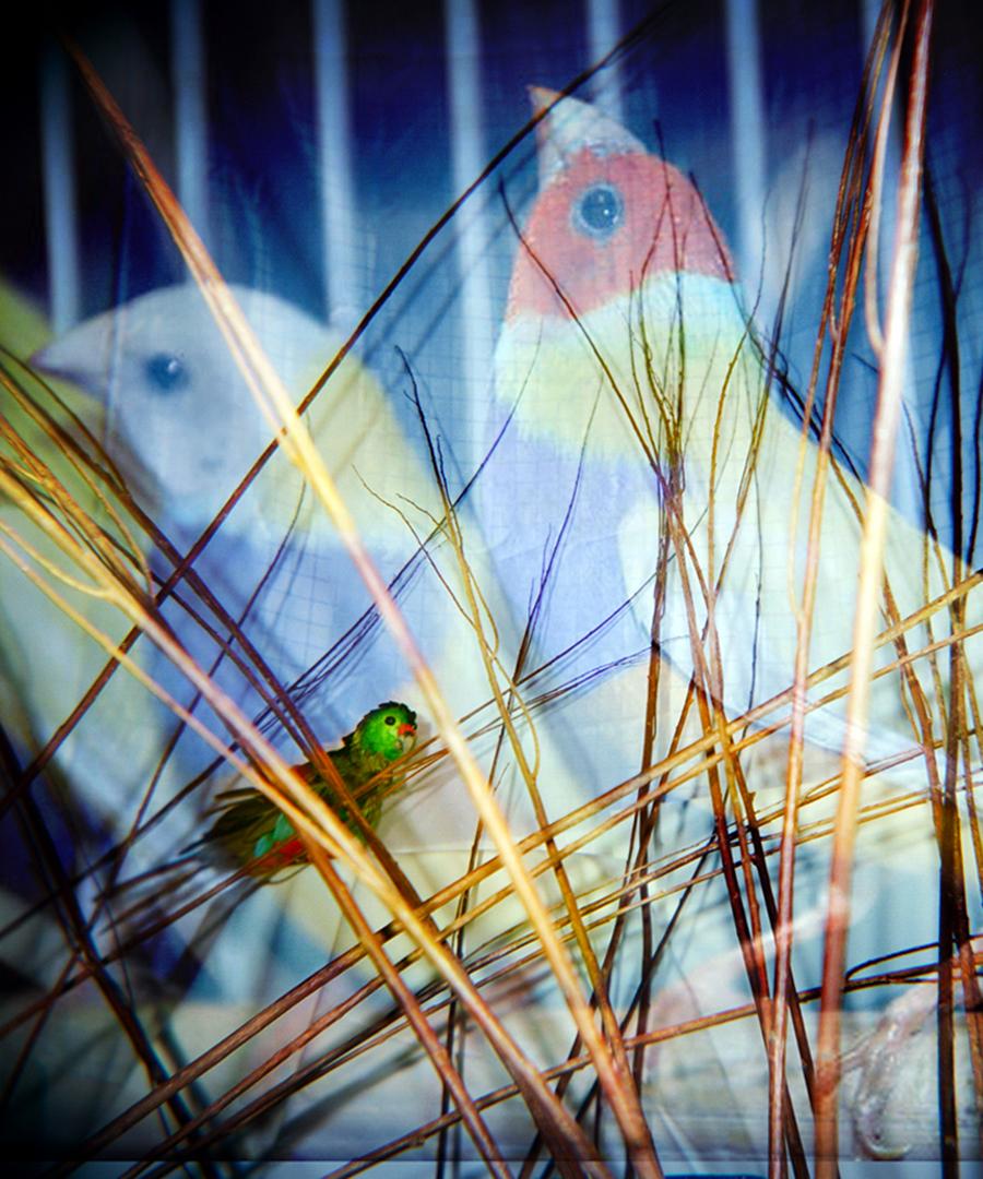©, , Birding the Future