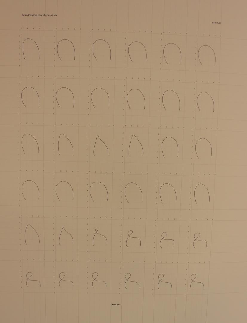 ©, Monica Bate Vidal, Anatomía para el movimiento: línea 3