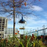 The Genre Project: Listening Stations for Birds that Play Human Music