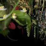 Grass, Scrub, Woodland, Fauna (Seven Sisters National Park Series)